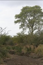 Dry River Bed (Soil Appearance) | Kruger National Park
