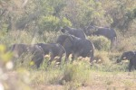 Elephant Family Leaving River Close to Bird Hide | Kruger National Park