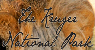 The Kruger National Park.com